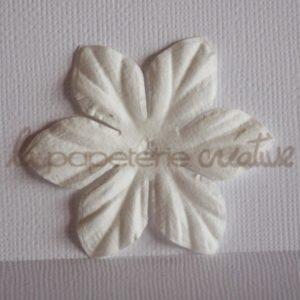 Clematis 2″ (5cm) – Lot de 2 – Blanc