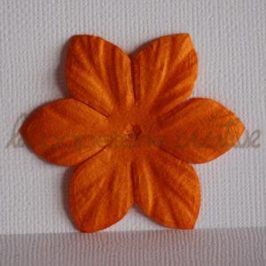 Clematis 2″ (5cm) – Lot de 2 – Abricot